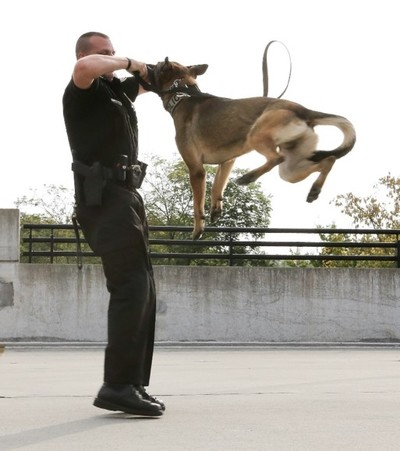 K-9 officer with his dog/partner demonstration