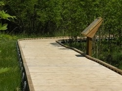 Wetland center board walk
